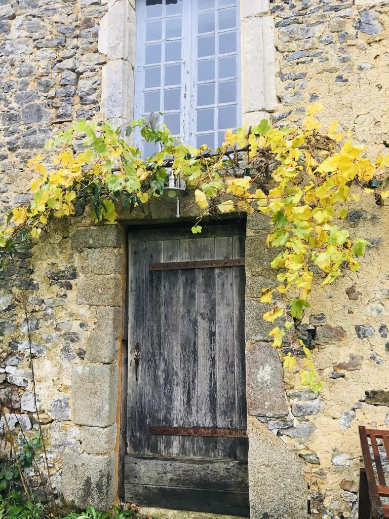 vigne grimpante au dessus vieille porte en bois