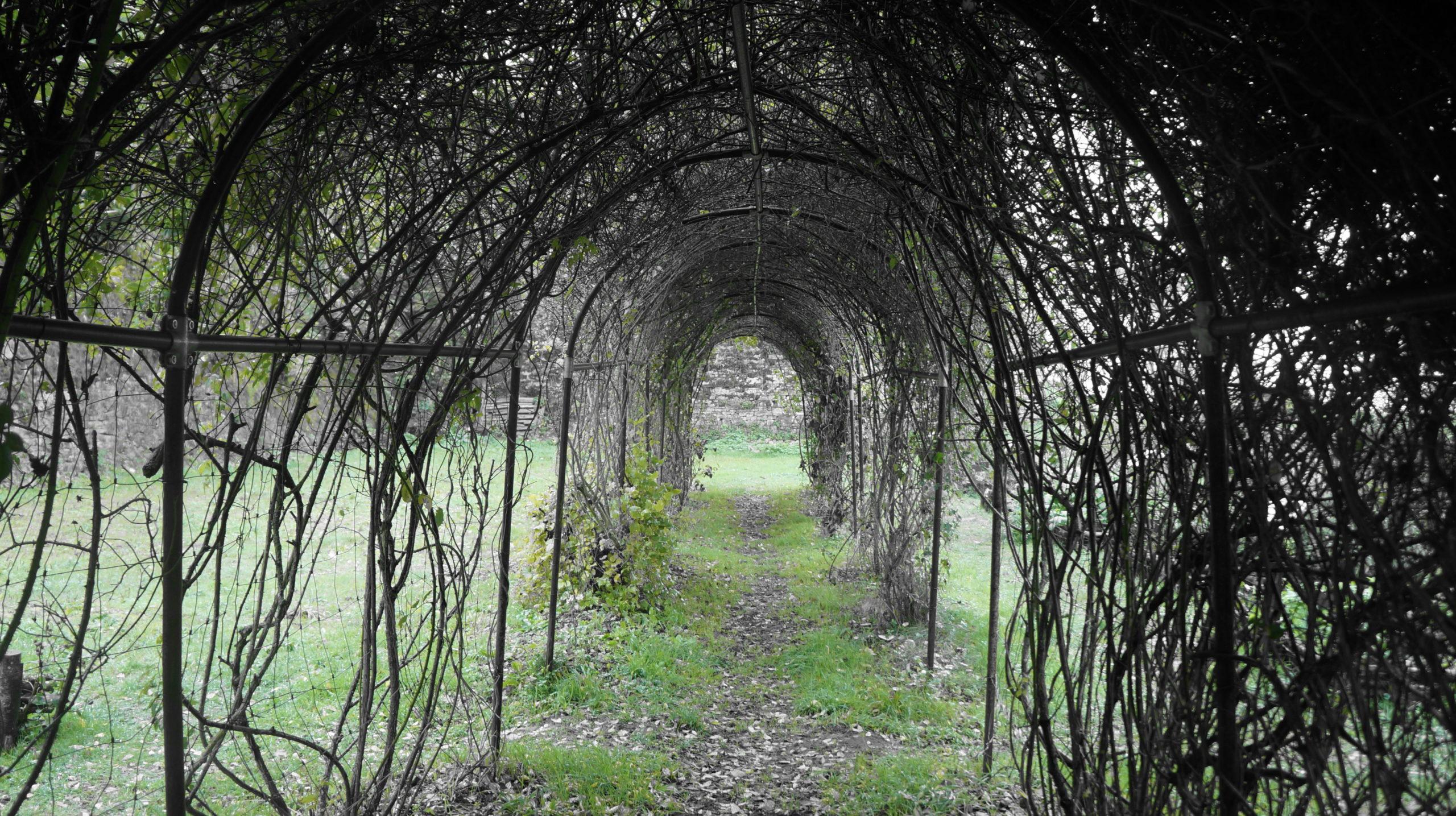 tonnelle végétale dans jardin médiéval