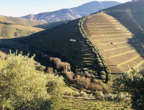 ROADTRIP PORTUGAL : le Douro