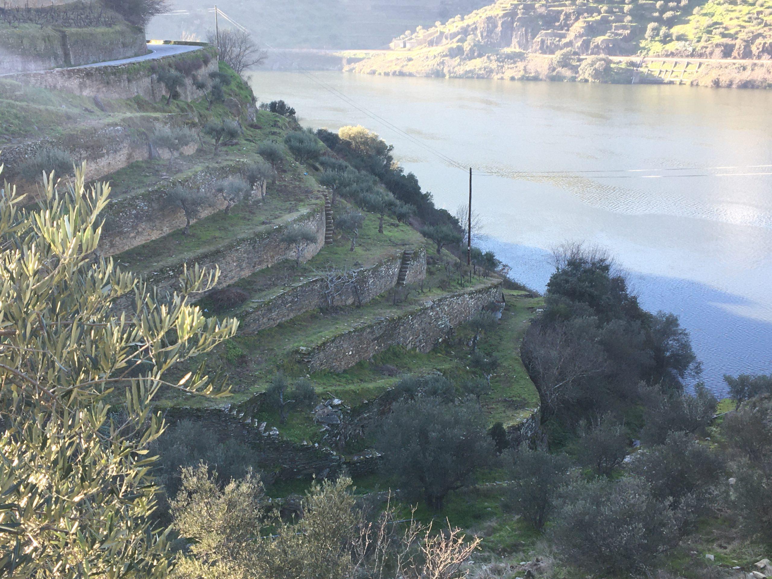 culture en terrasses de la vigne du douro